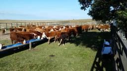 Velleda oferece 1080 hectares de cinema, porteira fechada 1000 cabeças gado