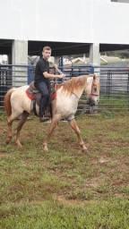 Cavalo selado