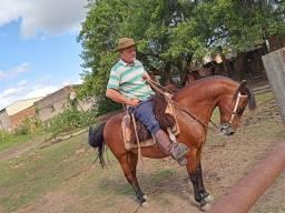 Vendo cavalo bom de comodo 2000