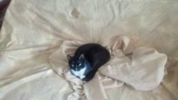 Docacao de gato