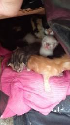 Gatos para adoção urgente