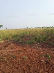 Arrendo terra para plantio