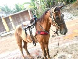 Vendo ou troco Cavalo de marcha picada