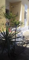 Casa à venda, 2 quartos, 1 suíte, 3 vagas, Sagrada Família - Belo Horizonte/MG