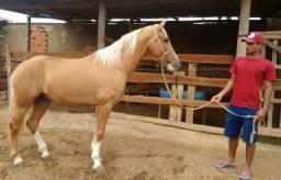 2 Cavalos, Manga larga marcha picada, leia.