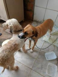 Estou doando esses dois cachorrinhos