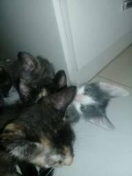 Doação de guatro gatinhos lindos