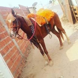 Esse cavalo e bom de mais na redia