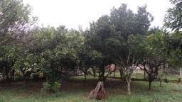 Velleda of. Sítio arborizado, casa de alvenaria, pomar, pertinho da RS040