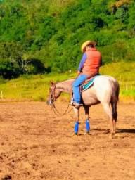 Jovem egua rosilha