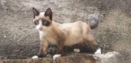Doação de gata fêmea em Sorocaba, Jardim Santa Rosália, urgente!