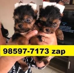 Canil Pet Filhotes Cães BH Yorkshire Basset Poodle Beagle Lhasa Shihtzu Maltês Bulldog