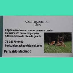 Adrestramento de cães