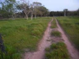 PA84 Área Rural para Venda, Primavera do Leste / MT - Área Total: 733,00 Hectares