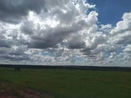 Fazenda pecuária 320 alq. Mato Grosso do Sul