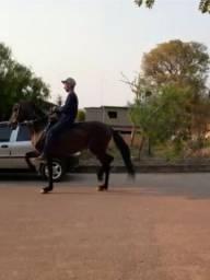 Cavalo inteiro manga larga garanhao