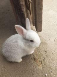 Vende-se filhote de coelho