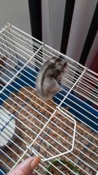Vende-se hamster com gaiola 70 aceito cartão