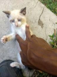 Estou doando esses filhotes da minha gata
