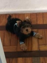 roupas de cachorro tamanho P