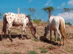 Cavalos eguas manga larga