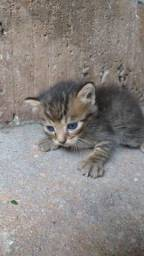 Doaçao gatinhos filhote