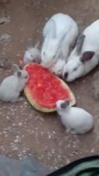 Vende-se lindo casal de coelhos