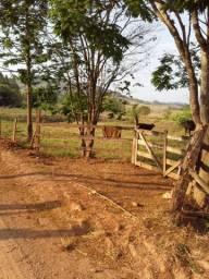 Chácara de 1 alqueire entre Caconde e Muzambinho MG