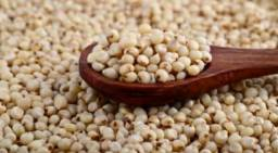 Vendo grãos de Sorgo