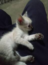Doase essa gatinha linda olhos azuis