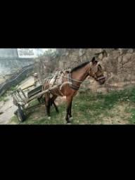 Cavalo arriado com carroça leia anúncio