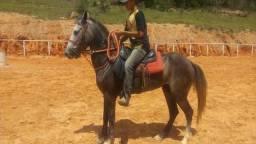 Cavalo luxo!!!!!!!!!