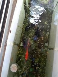 Peixes Ornamentais e Acessórios