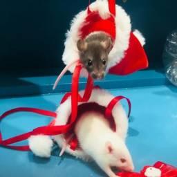 Ratinho twister promoção natal