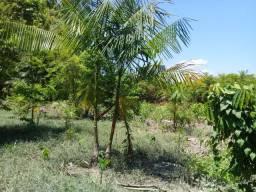 Vendo terreno na costa de Mazagão