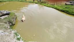 12 hectares em Belo Vale -mg TTG
