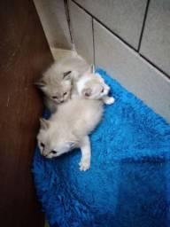 Gatinhos mestiços