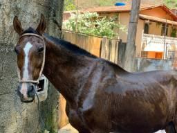 Cavalo Mangalarga (PRA VENDER RÁPIDO)