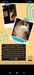 Doação Gata fêmea (prenha)
