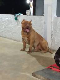 Pit Monsters