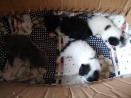 Lindo filhotes gatos persa