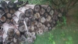 Lenha seca eucalipto natural