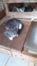 Doandó gatinhos (filhotes)