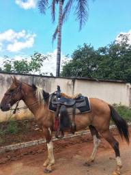 Cavalo meio sangue bom e barato