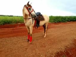 Cavalo vai com sela caneleiras manta e freio tudo em perfeito estado