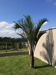 Palmeira Triangular 2,5m