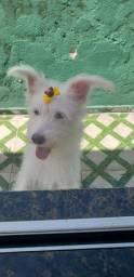 Cachorra maltes e poodle