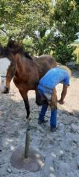 Cavalo ligeiro