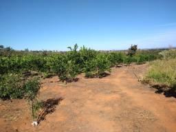 Vendo Chácara 3.8 hectares proximo ao Bezerra