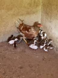 Angola filhotes